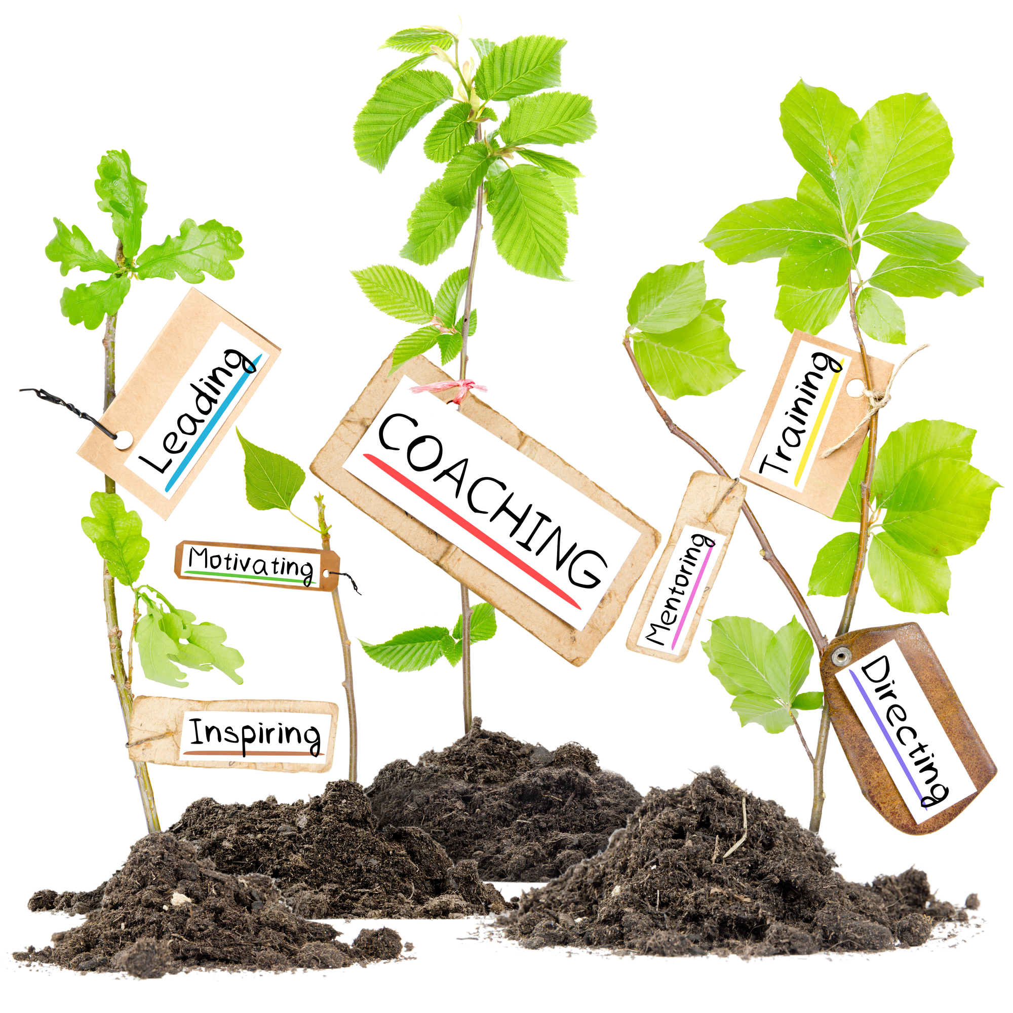 Photo of plants growing from soil heaps with COACHING conceptual words written on paper cards